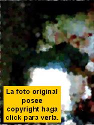 Copyright cuartoscuro.com