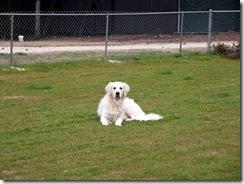 Jackie in Dog Run Emerald Coast