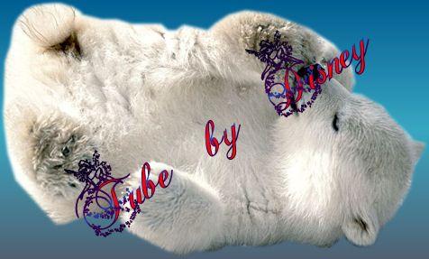 ijsbeer welpje1.jpg