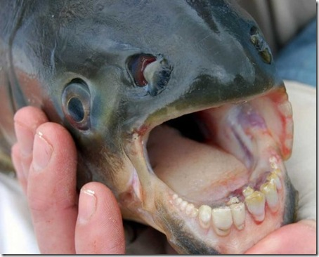 fish_with_human_teeth