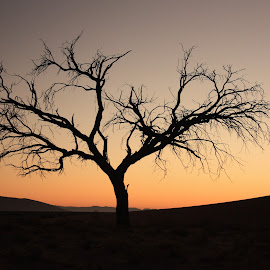Sunrise in the Namib by Johanna Koekemoer - Landscapes Sunsets & Sunrises