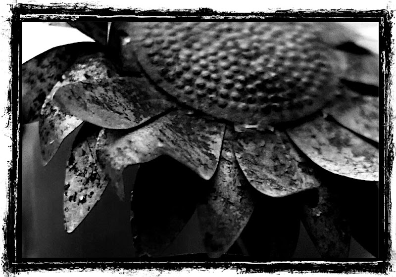 Rusty Flower Worlds Beyond Rittman Photoblog Black and White photography image photos photojournalism