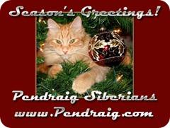 Christmas2008_CatsECard