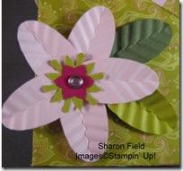 flowercloseup_cindyfodoride