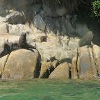 Seehunde am sonnen