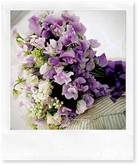 purple summer flowers