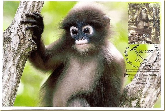 Max. Card-Phayre's Leaf Monkey