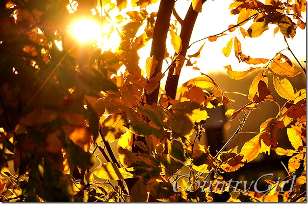 sun and leaves-6
