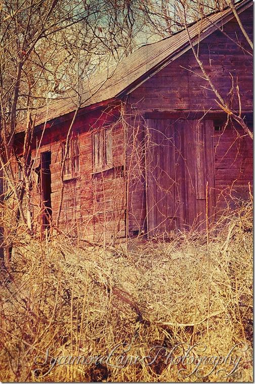 tumbled down barn-w
