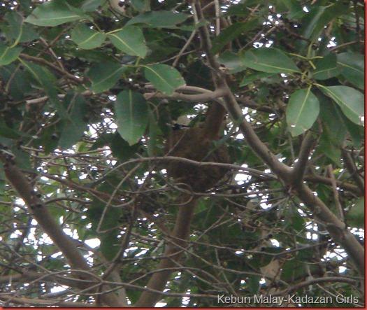 nesting (2)