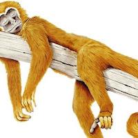 Macacos C (8).jpg