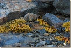 sea weed art