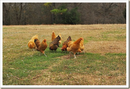 8 sweet hens
