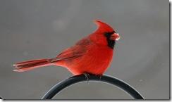 cardinal m2