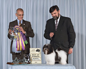 Best of Winners and Best Puppy in Specialty