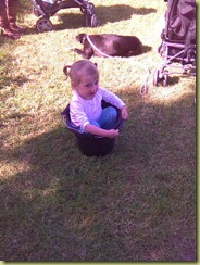 holly in a bucket