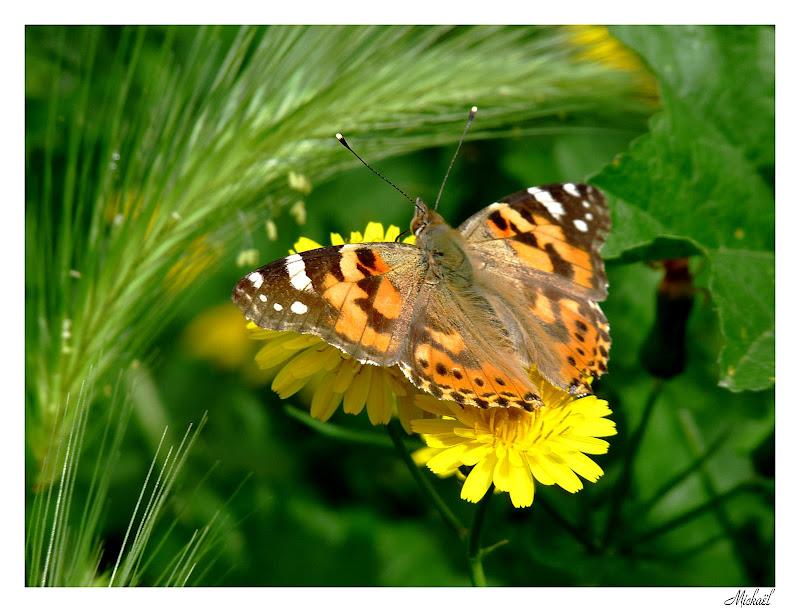 orange marron jaune vert Papillon010509
