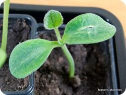 21-03 butternut squash