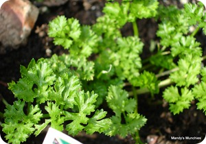 Parsley 19 Sept