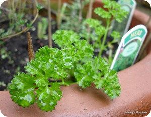 Parsley 3 Nov 09