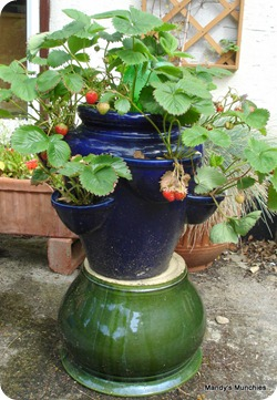 Strawbs 25 June on pot