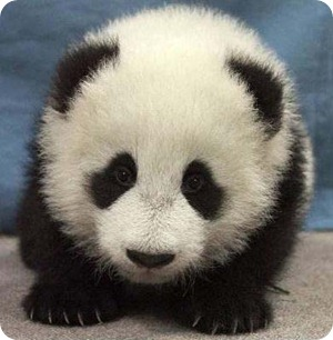 panda3