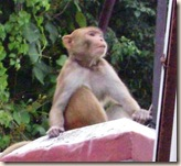 Monkey