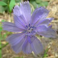 Violet-1280x1024.jpg