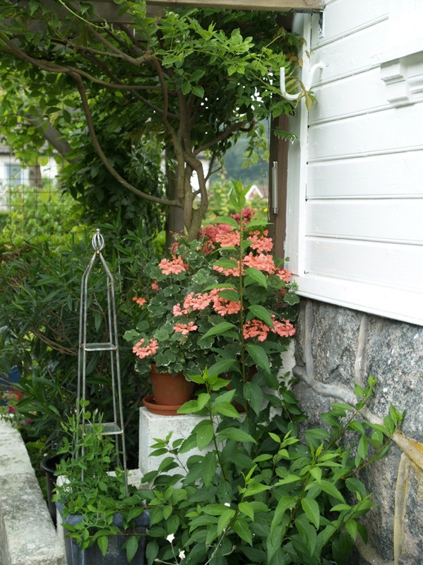 2010-08-10 Hagen (4)
