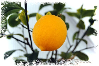 lemon
