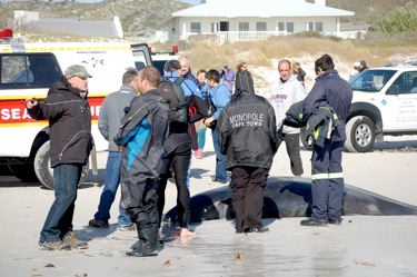 Whales beach in Kommetjie, Cape Town, South Africa.  Rescue Workers.