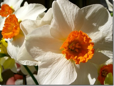 Flowers 1 (1280 x 960)