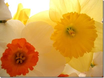 Flowers 4 (1280 x 960)