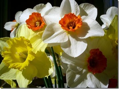 Flowers 3 (1280 x 960)