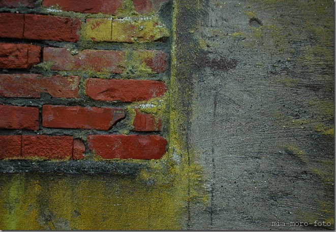 anotherbrickinthewall2