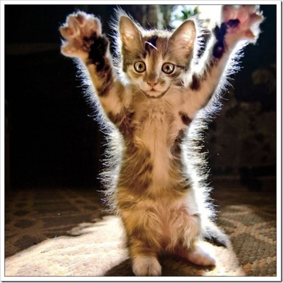 kitty_hands_up-600x600