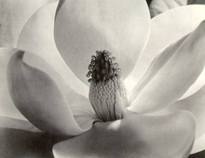 mapplethorpe orquidea