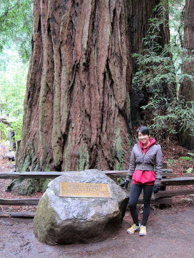 Muir Woods National Monument Leor Pantilat S Adventures
