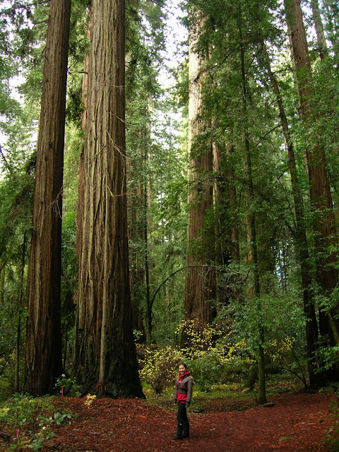 Serena enjoys the redwoods