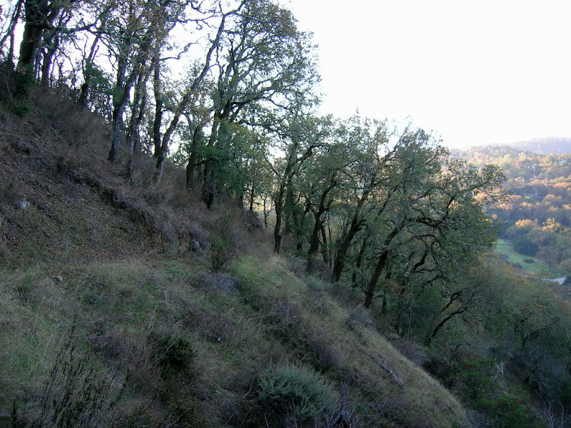 View of Coalmine Ridge - Portola Valley Ranch