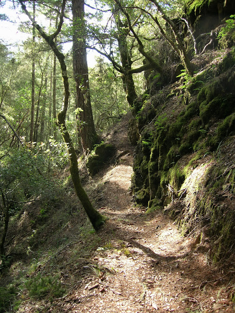 Narrow single track on the Canyon Trail