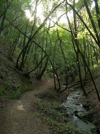 Adobe Creek Trail