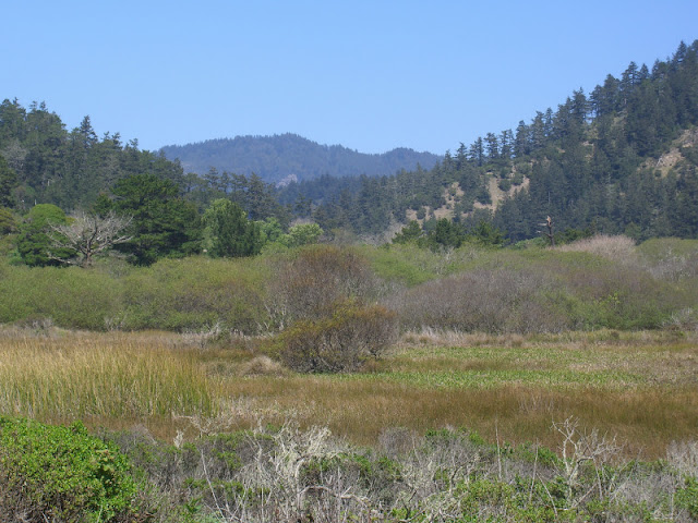 View of McCrary Ridge from Rancho del Oso/Waddell Beach