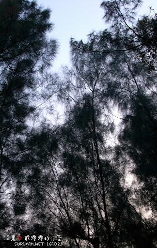 20090107松2.jpg