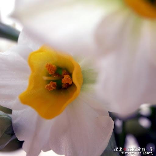 春花之半遮面.jpg