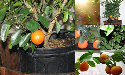 View Tangerine