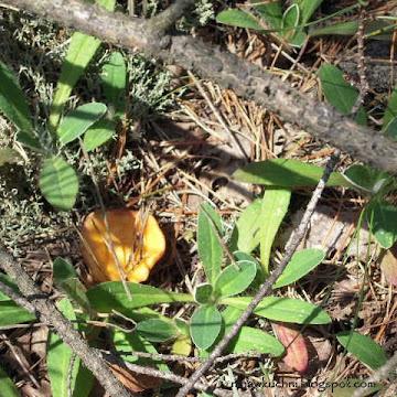 Jajecznica leśna z kurkami i szalotkami - Czytaj więcej »