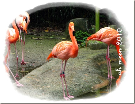 flamingo2_birdpark_aug2010