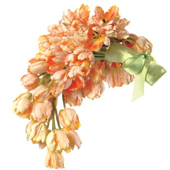 cascading_peach_tulips