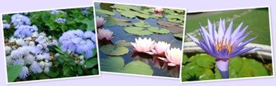 Visualizza fleurs3